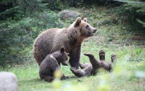 Parc Animalier des Pyrénées, activité à faire pour les enfants pendant les vacances
