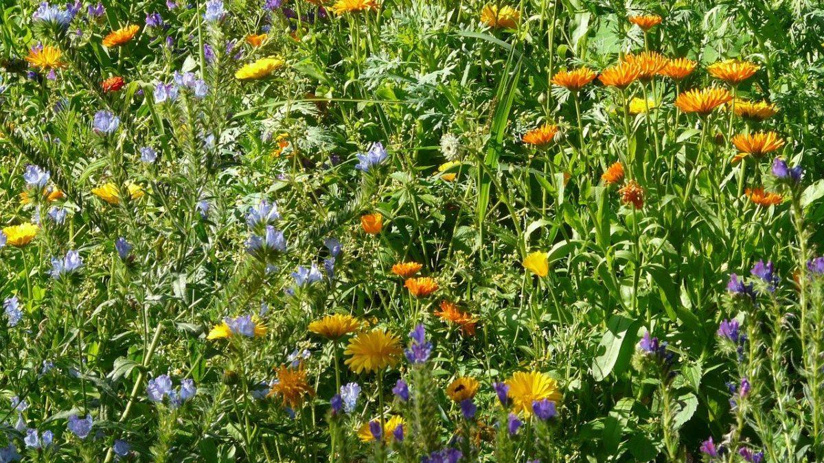 Couleur nature avec les mélanges de fleurs !