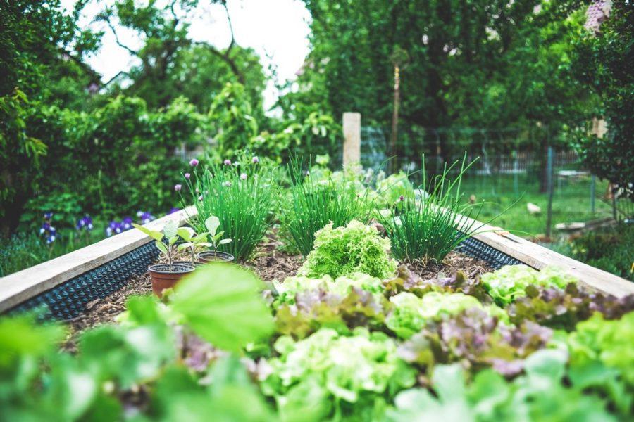 jardinage décoration jardin