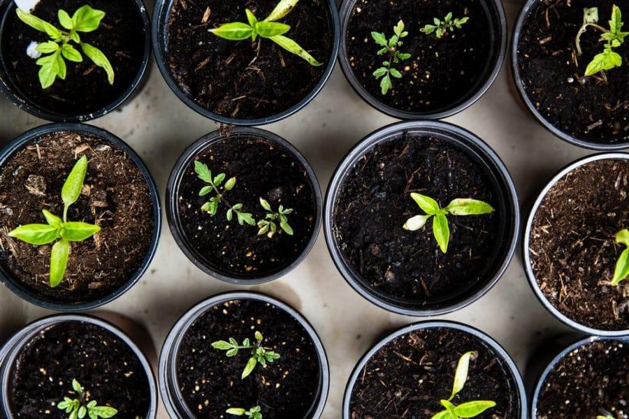 5 choses à faire en avril au jardin
