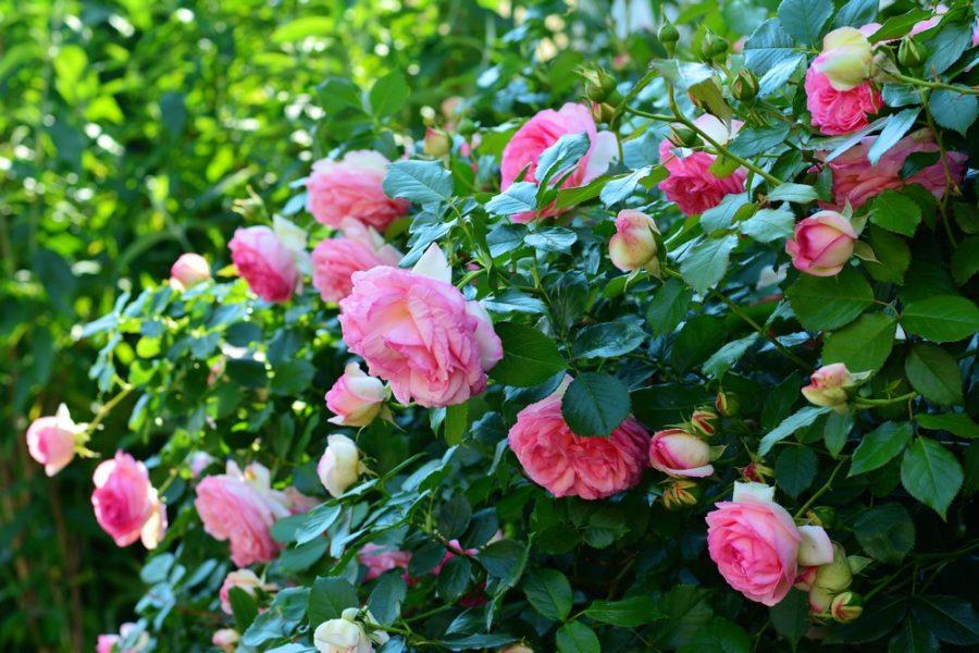 4 végétaux à planter au jardin au printemps