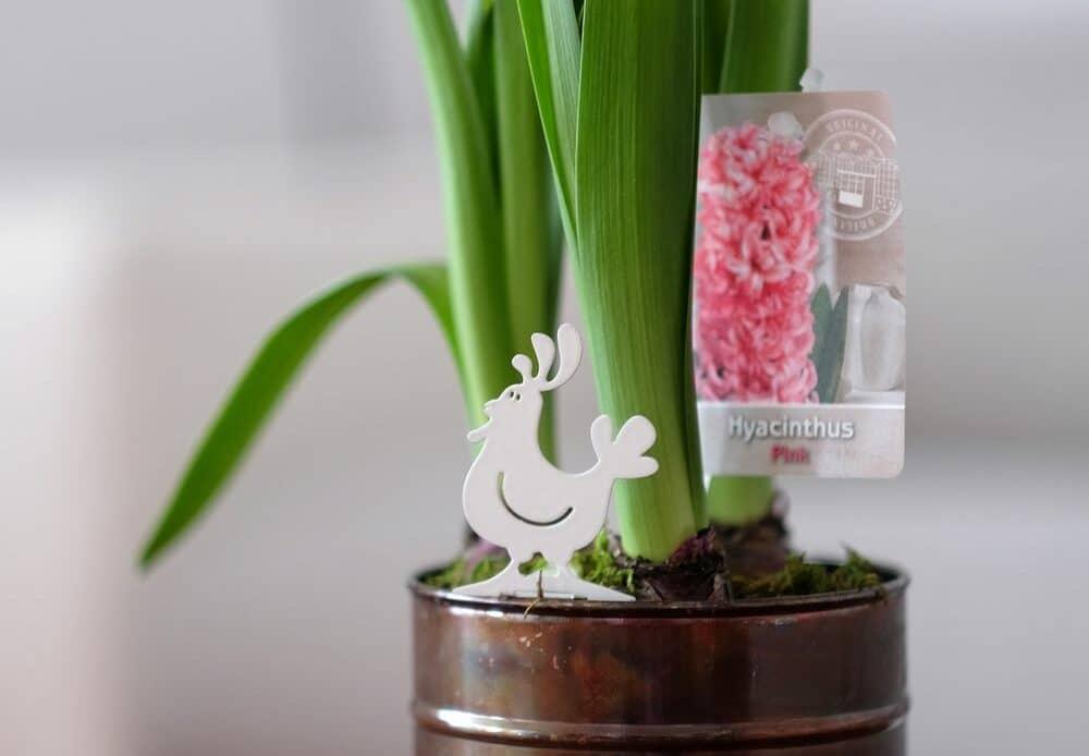 plante Pâques