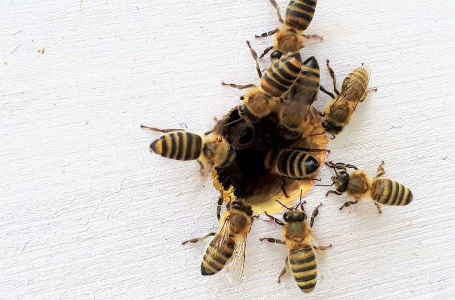 abeilles abri