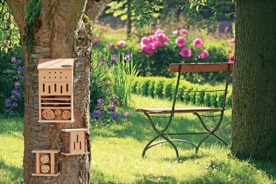 abeilles au jardin