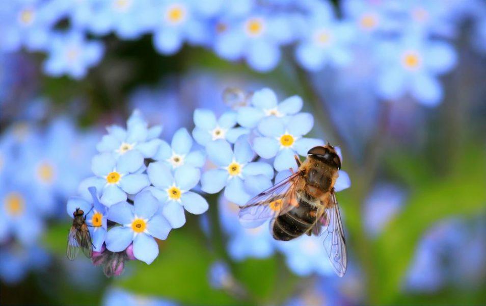 Inviter les abeilles dans son jardin